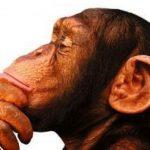 O Centésimo Macaco